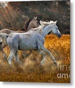 Neck And Neck Metal Print by Susan Candelario