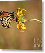 Nectar Delight Metal Print