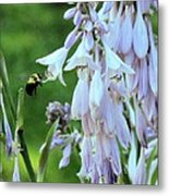 Nectar For The Bumblebee Metal Print
