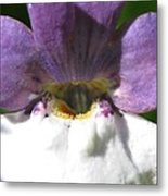 Nemesia From The Tapestry Mix Metal Print