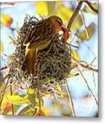 Nesting Instinct Metal Print by Carol Groenen