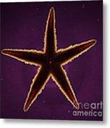 Netted Sea Star Metal Print