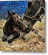 New Born Foal Metal Print