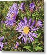 New England Aster Wildflower - Purple Metal Print