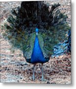 New Feathers Metal Print
