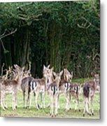 New Forest Deer Metal Print by Karen Grist