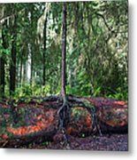 New Growth Metal Print by Anthony Jones