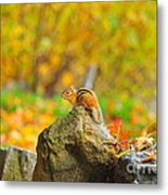 New Hampshire Chipmunk Metal Print