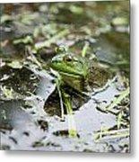 New Hampshire Frog Metal Print