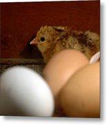 New Hatching Metal Print