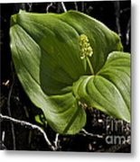 New Life From The Forest Floor Metal Print