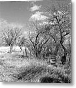 New Mexico Series - Bare Beauty Metal Print