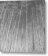 New Mexico Series - Leaf Free Black And White Metal Print
