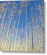 New Mexico Series - Leaf Free On The Mountain Metal Print
