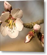 Newly Formed Buds And Flowers Bloom Metal Print