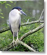 Night Heron On Branch Metal Print