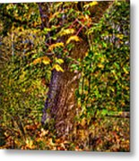 Nisqually Wildlife Refuge P12 The Maple Tree Metal Print