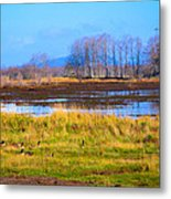 Nisqually Wildlife Refuge P5 Metal Print