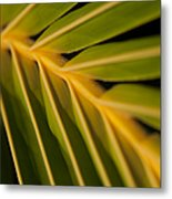 Niu - Cocos Nucifera - Hawaiian Coconut Palm Frond Metal Print