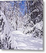 No Footprints Metal Print by Rob Travis