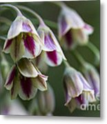 Nodding Bells. Metal Print