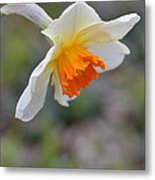 Nodding Narcissus Metal Print