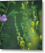 Nootka Rose And Yellow Toadflax Metal Print