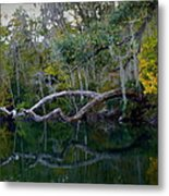 North Florida River Reflections Metal Print
