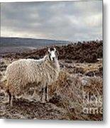 North York Moors Sheep Metal Print