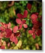 Northern Bilberry Metal Print