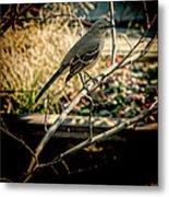 Northern Mockingbird On The Highline Metal Print