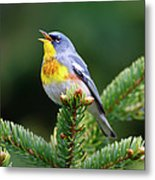 Northern Parula Parula Americana Male Metal Print