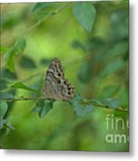 Northern Pearly Eye Butterfly Metal Print