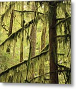 Northwest Mossy Tree Metal Print