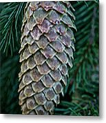 Norway Spruce Cone Metal Print