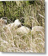 Not A Care In The World Metal Print