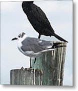 Not Birds Of A Feather Metal Print