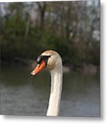 Not For Sale Test Image Metal Print