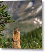 Not Much...whatz Up With You? Metal Print