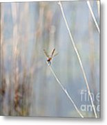 Nothing To Do But Wait Metal Print