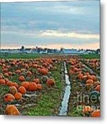 November Pumpkins Metal Print