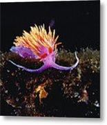 Nudibranch Brightly Colored Arctic Ocean Metal Print