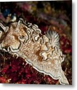 Nudibranch Metal Print