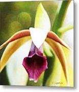 Nun's Cap Orchid -5 Metal Print