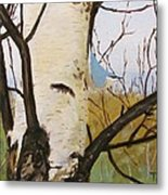 Nuthatch On A Silver Birch 2 Metal Print