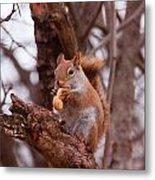 Nutty Squirrel Metal Print