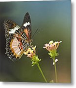 Nymphalid Butterfly Cethosia Luzonica Metal Print