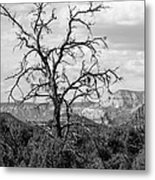 Oak Creek Tree Metal Print