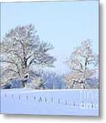 Oak In Snow Metal Print
