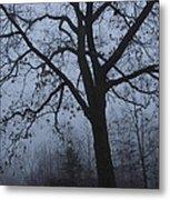 Oak In The Fog Metal Print